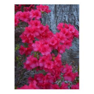 Productos del arte de la flor de CricketDiane de Tarjetas Postales