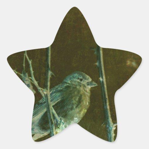 Productos del arte del Birdsong Colcomanias Forma De Estrellas