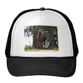 ¡Productos del caballo de Morgan!! Gorra