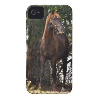 ¡Productos del caballo de Morgan!! iPhone 4 Cárcasa