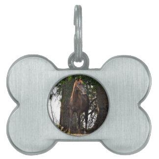 ¡Productos del caballo de Morgan Placa De Mascota