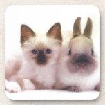 Productos del gatito y del conejito