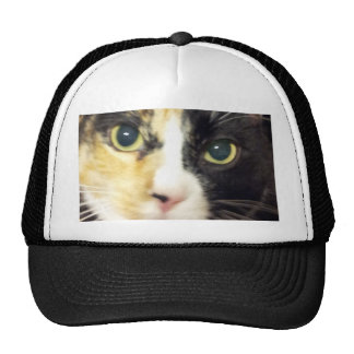 Productos del gato de calicó gorras