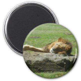 Productos del león imán redondo 5 cm