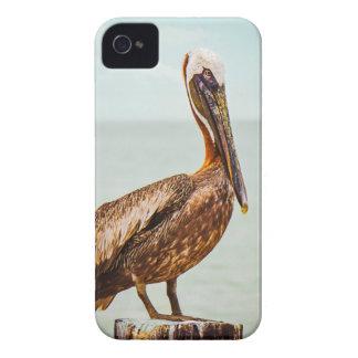 Productos del pelícano iPhone 4 Case-Mate coberturas
