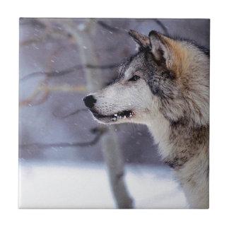 Productos fornidos negros del perro azulejos ceramicos