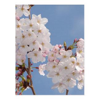 Productos hechos en casa de las flores de Sakura Postales