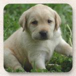 Productos y regalos del perrito del labrador retri