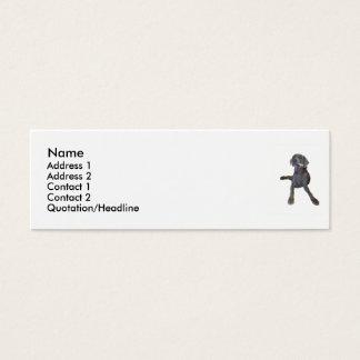 Profile Cards Weimaraner