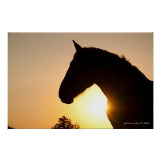 Profile of a Belgian Draft Horse Poster