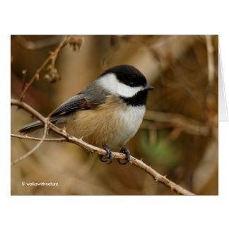 Profile of a Black-Capped Chickadee Card