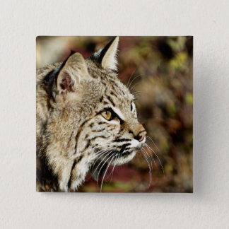Profile of a Bobcat Pinback Button