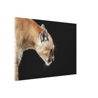 Profile of a Cougar Canvas Print