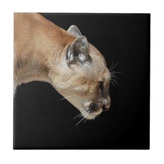 profil cougar meaux