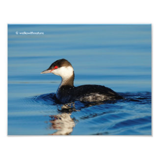 Profile of a Horned Grebe Photo Print