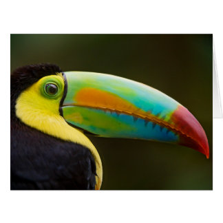 Profile of a Keel-billed Toucan Greeting Cards