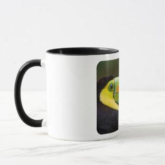 Profile of a Keel-billed Toucan Mug
