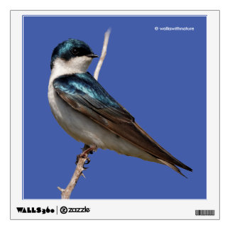 Profile of a Male Tree Swallow in the Sun Wall Sticker