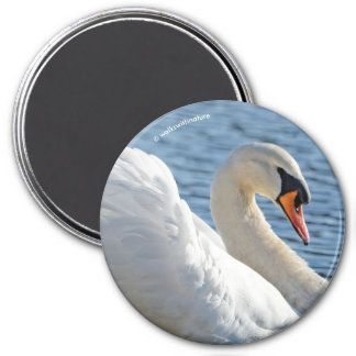 Profile of a Mute Swan Magnet
