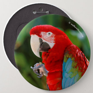Profile of a Pretty Green-Winged Macaw Pinback Button