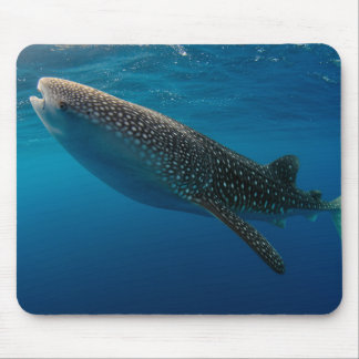 Profile of a whale shark, Indonesia Mouse Pad