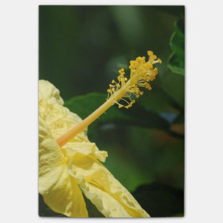 Profile of a Yellow Hibiscus Post-it® Notes