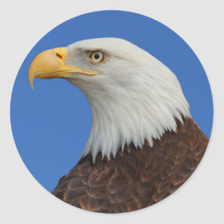 Profile of an Adult Bald Eagle Classic Round Sticker