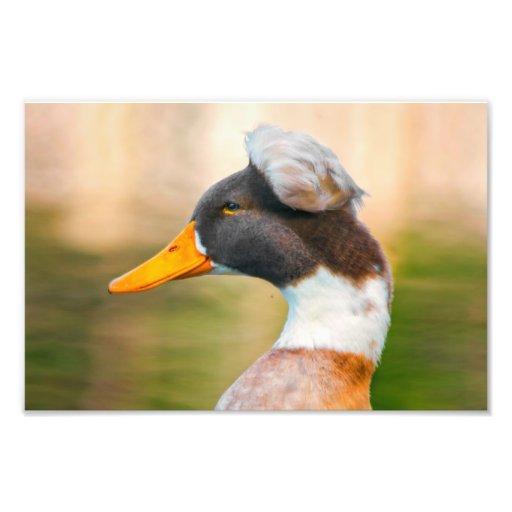 Profile of an unusual Duck Photo Art