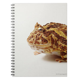 Profile of Argentine Horned Frog Spiral Note Books