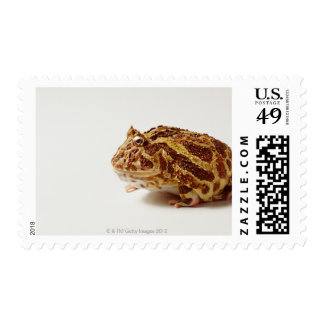 Profile of Argentine Horned Frog Postage