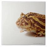 Profile of Argentine Horned Frog Tile