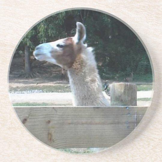 Profile of Llama Coaster