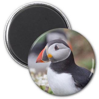 Profile of Puffin on Skomer Island 2 Inch Round Magnet