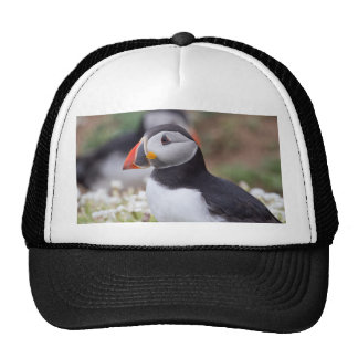 Profile of Puffin on Skomer Island Mesh Hats