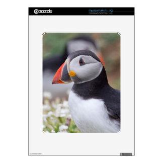 Profile of Puffin on Skomer Island Skin For The iPad