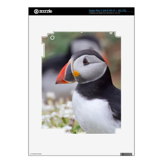 Profile of Puffin on Skomer Island Skins For iPad 3