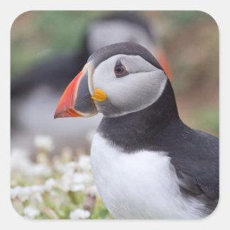 Profile of Puffin on Skomer Island Square Sticker