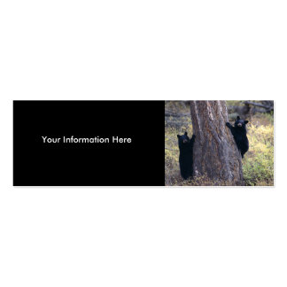 profile or business card black bear cubs