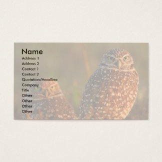 profile or business card, burrowing owls business card