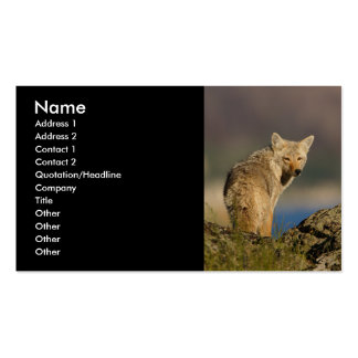 profile or business card, coyote Double-Sided standard business cards (Pack of 100)