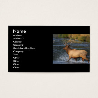 profile or business card, elk splash business card