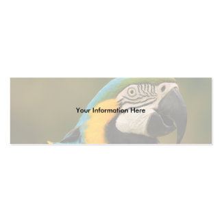 profile or business card, macaw Double-Sided mini business cards (Pack of 20)