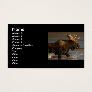 profile or business card, moose business card
