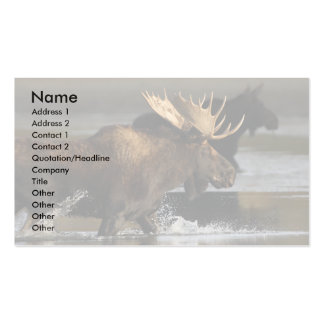 profile or business card, moose splash business card
