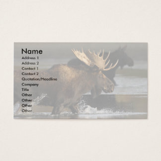 profile or business card, moose splash business card