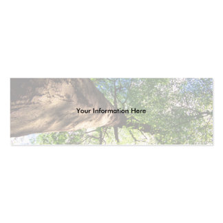 profile or business card, old growth tree mini business card