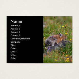 profile or business card, pika business card