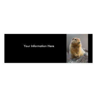 profile or business card, squirrel Double-Sided mini business cards (Pack of 20)