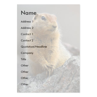 profile or business card, squirrel