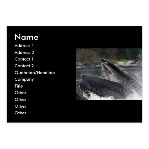 profile or business card, whale